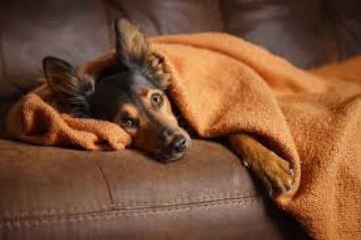 Dog Flu Outbreak in Muskoka
