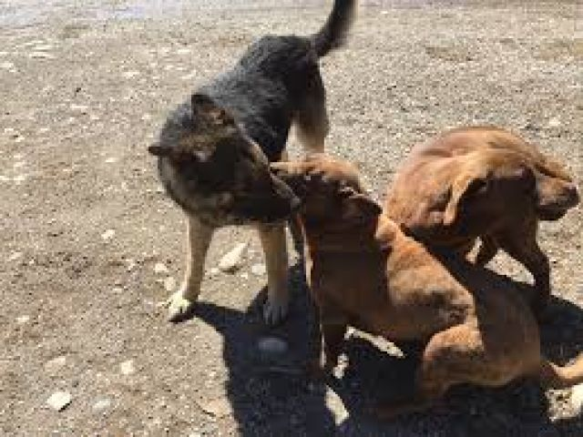 Northern Dogs Up For Adoption In Muskoka