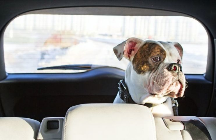 Bracebridge Idling Bylaw Tweaked To Include Pets In Cars